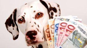 Bonus di 500 euro per chi possiede un animale domestico